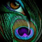 Peacock-Eye-150x150